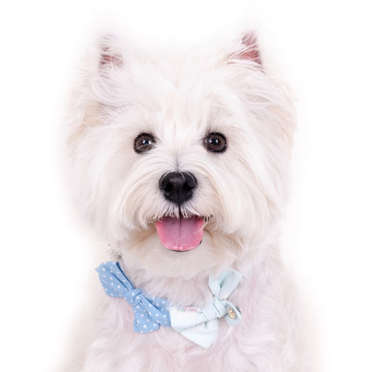 Hey Cuzzies Bow Dog Necklace (Blue) - Kohepets