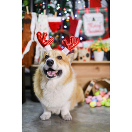 EXCLUSIVE: Kohepets Christmas Photoshoot Package