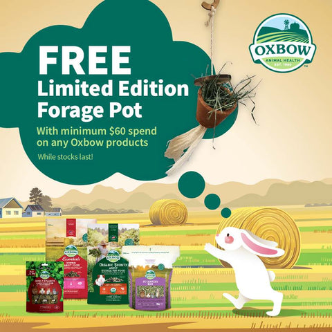 'FREE W/ MIN. $60 OF OXBOW': Oxbow Enriched Life Forage Pot For Small Animals - Kohepets
