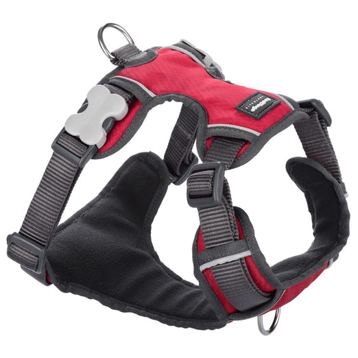 Red Dingo Padded Dog Harness (Medium)