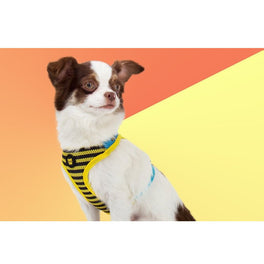 Zee.Dog Buzz Air Mesh Plus Dog Harness
