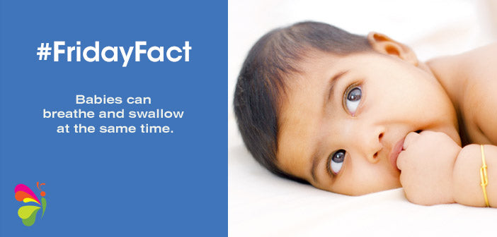 #FridayFact: Swallow and Breathe!