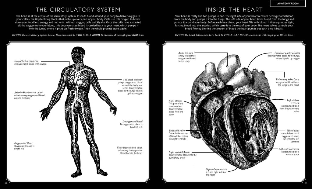 Illumanatomy: See inside the human body with your magic viewing lens (See 3 images in 1)