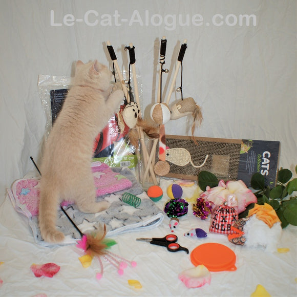 Kit d'accueil chaton - Royal