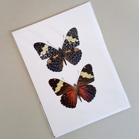 Macro Photography Greeting Card with Envelope Two Butterflies - Unik by Nature