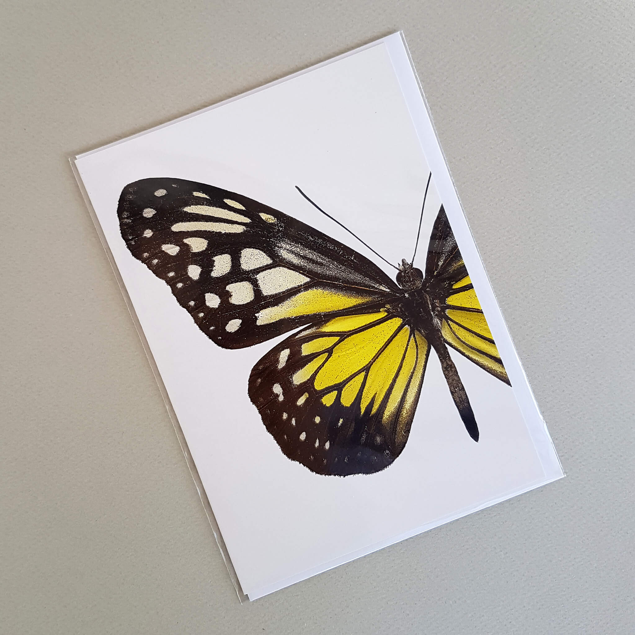 Macro Photography Greeting Card with Envelope Yellow Butterfly - Unik by Nature