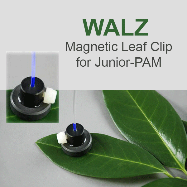 Walz JUNIOR-PAM Magnetic Leaf Clip, Walz Fluorometers and Photosynthesis Equipment - Bay Instruments, LLC