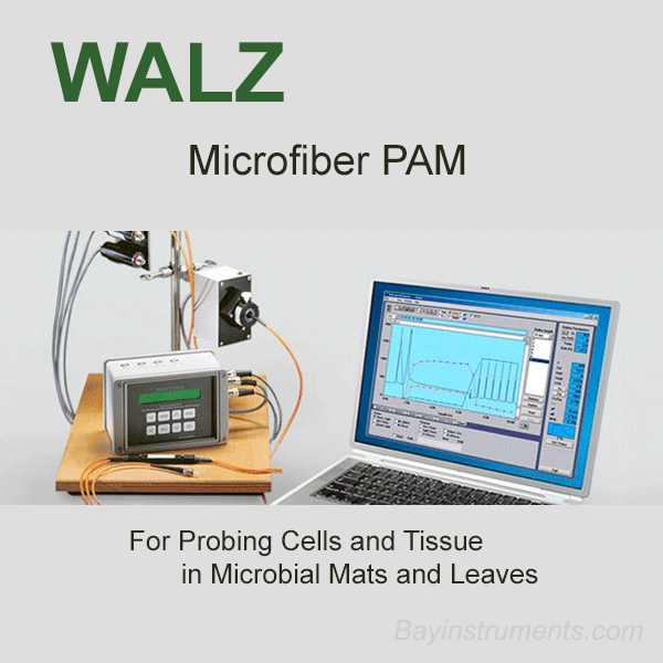 Walz MICROFIBER-PAM, Walz Fluorometers and Photosynthesis Equipment - Bay Instruments, LLC