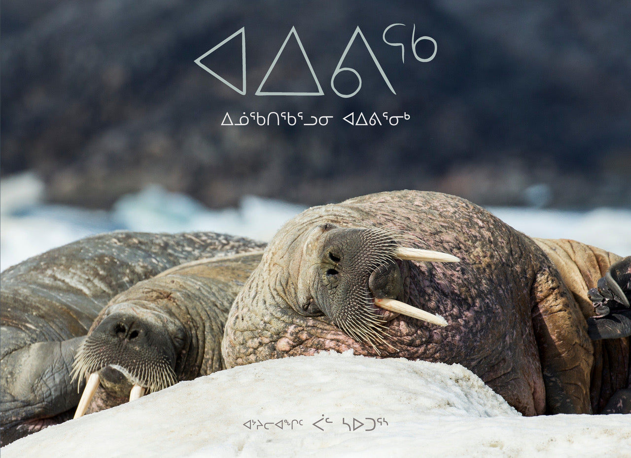 Aiviq : Life with Walruses