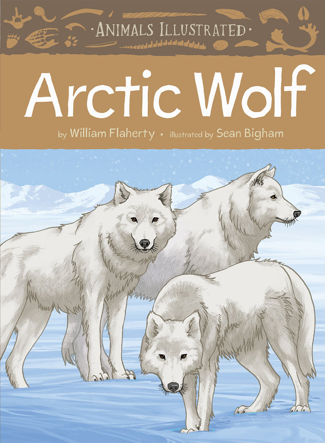 Animals Illustrated: Arctic Wolf