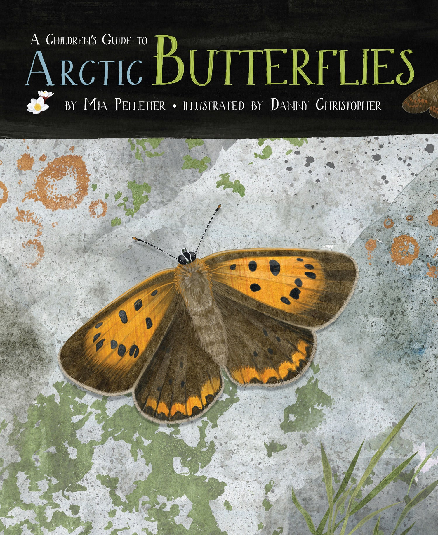 A Children's Guide to Arctic Butterflies
