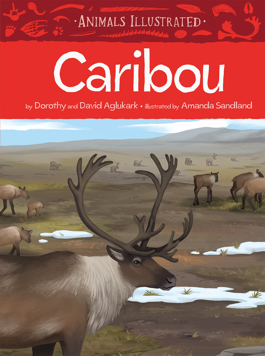 Animals Illustrated: Caribou