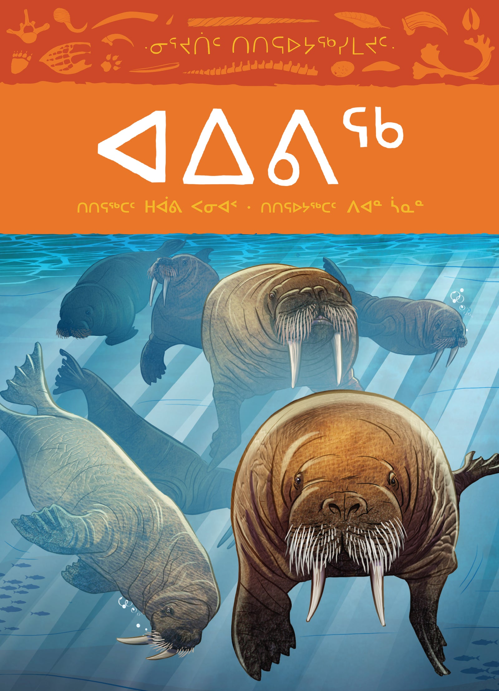 Animals Illustrated: Walrus