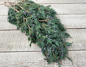 Preserved Blueberry Juniper - Luv Sola Flowers - Filler