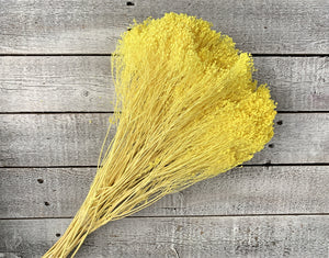 Dried Baby's Breath - Luv Sola Flowers - Filler