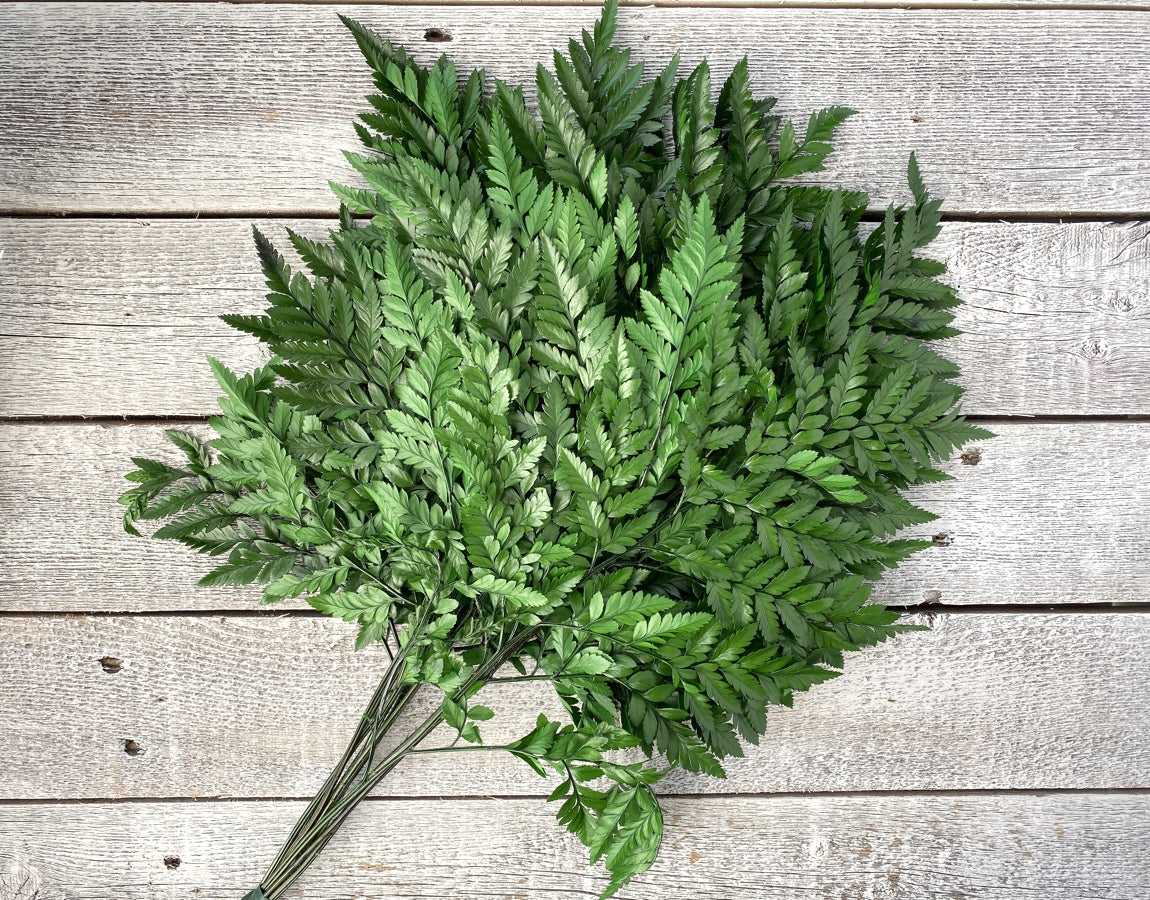 Preserved Leather Fern - Luv Sola Flowers - Filler