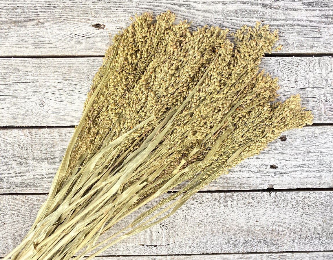 Seeded Grass - Luv Sola Flowers - Filler