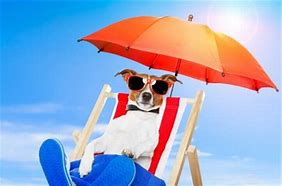 How To Help Your Dog With The Summer Heat