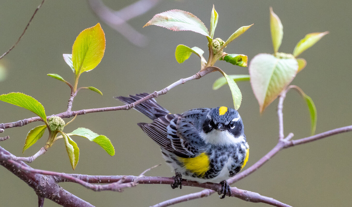 Black and yellow bird on a branch