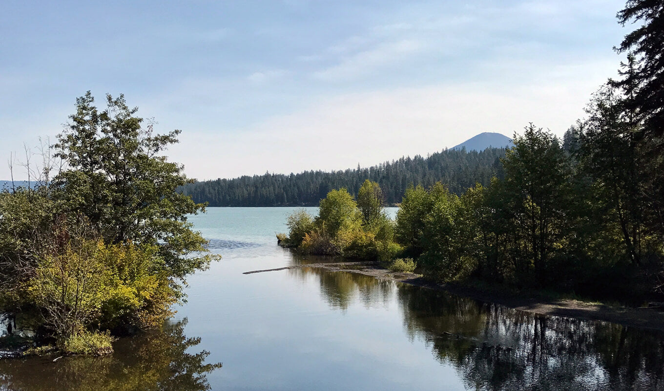 Mangroove at Suttle Lake