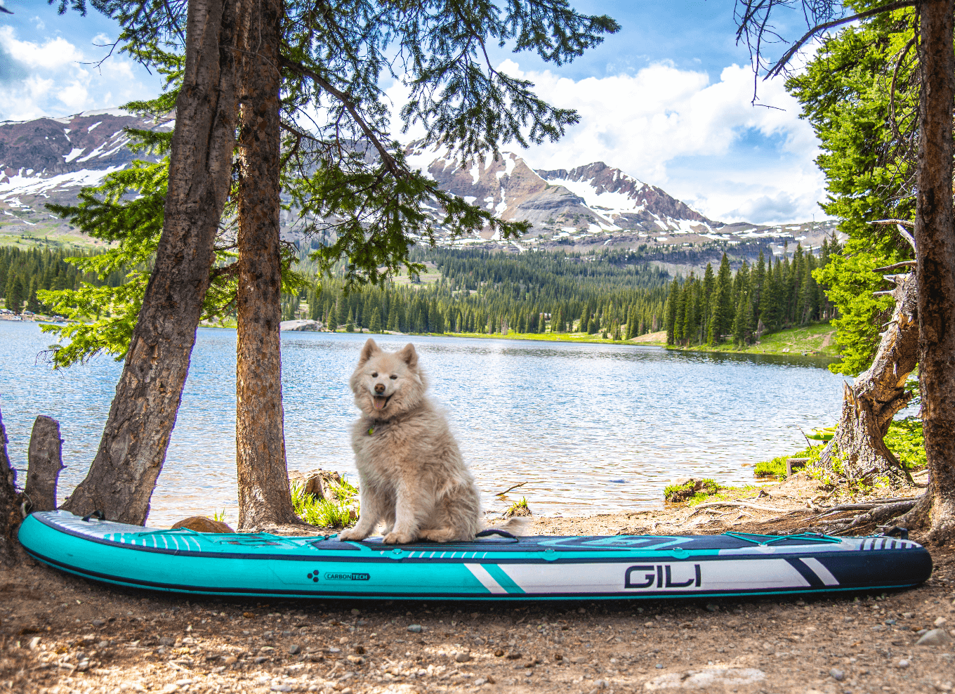 Best paddle board for dogs - dog in trees