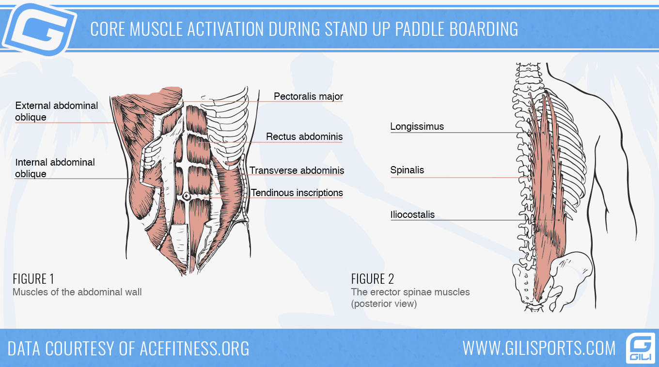 Infographic: Core Muscle Activation During Stand Up Paddle Boarding