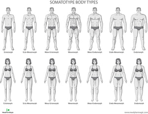 Somatotype Body Types for Men and Women by MealPlanMagic Custom Meal Plan and Meal Prep All-In-One Tool Template Software