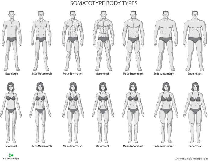 Which Somatotype Body Type Are You? Characteristics and Images for Men and Women