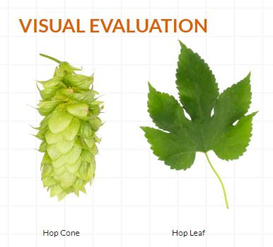 Lotus Visual Evaluation - Courtesy of Hopsteiner