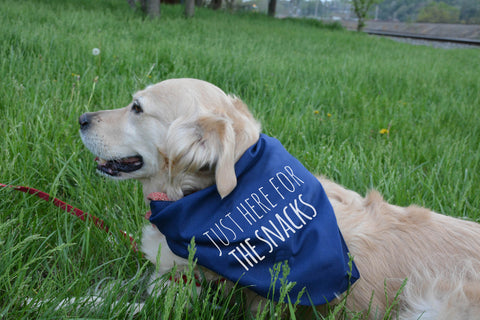Just Here For the Snacks - Dog Bandana - Navy - MoonlightMakers