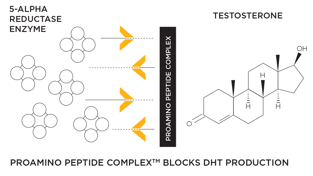 Chemistry graph - ProAmino Peptide Complex blocks DHT production