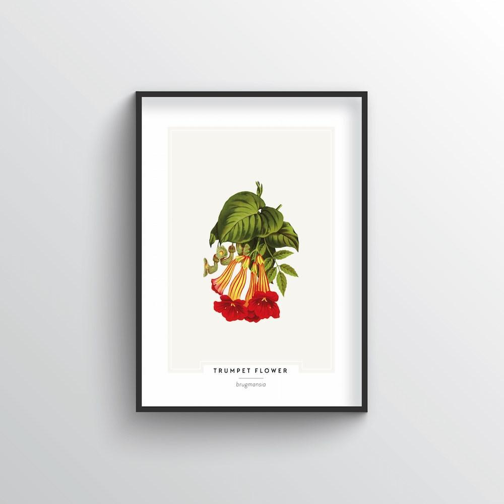 Trumpet Flower Botanical Art Print
