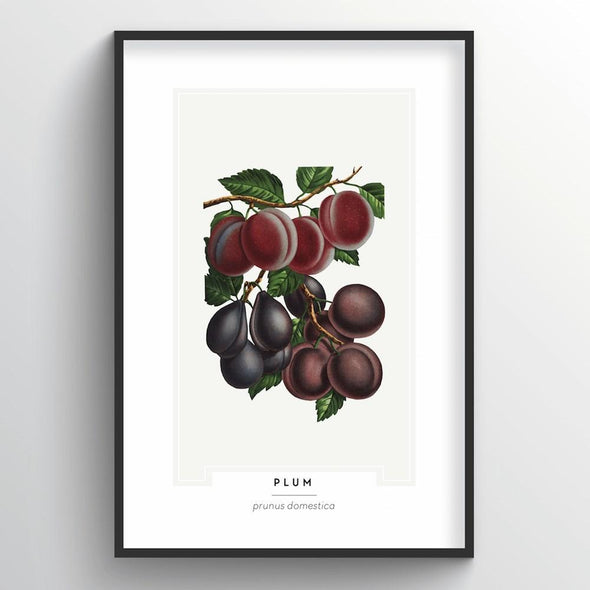 Plum Botanical Art Print