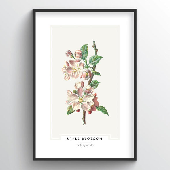 Apple Blossom Botanical Art Print