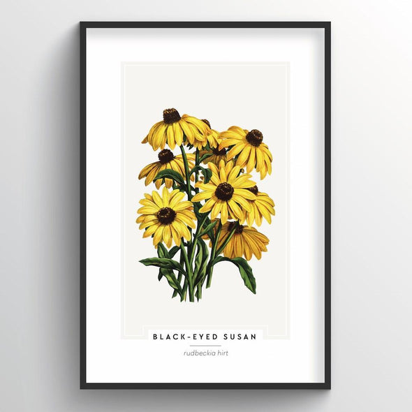 Black Eyed Susan Botanical Art Print