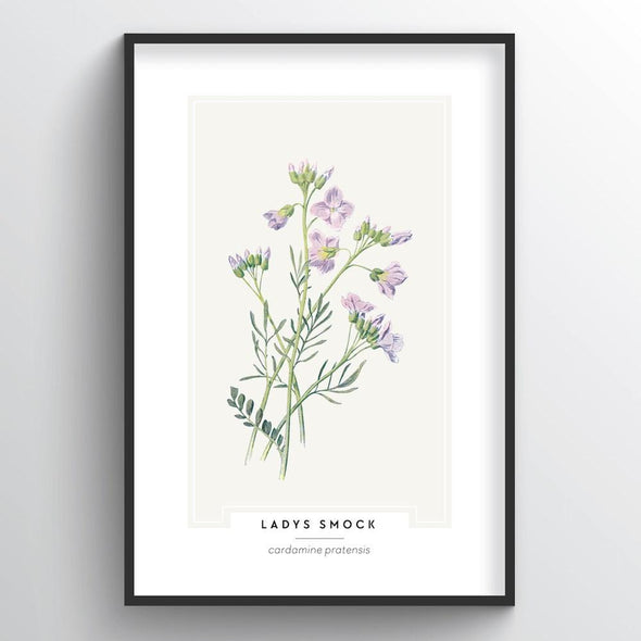 Lady's Smock Botanical Art Print