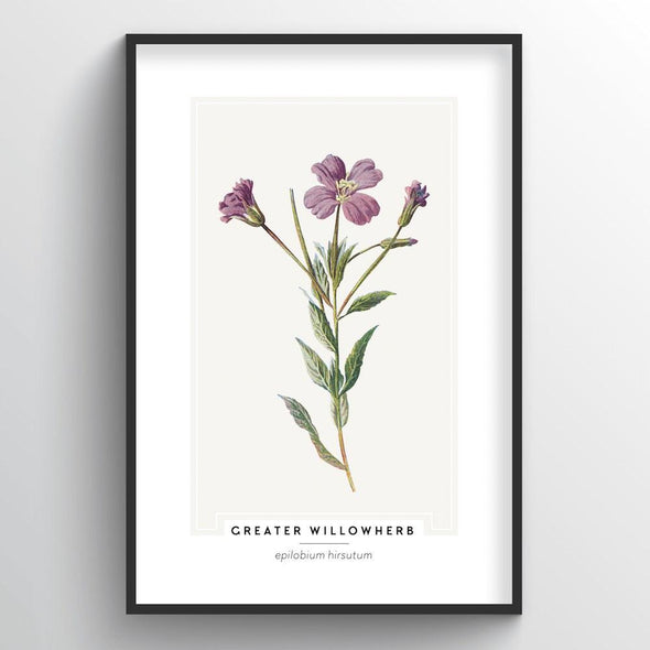 Greater Willowherb Botanical Art Print