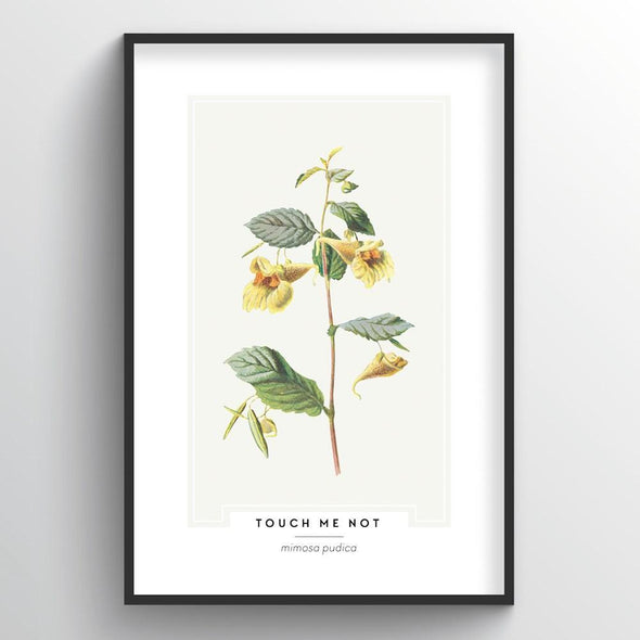 Touch Me Not Botanical Art Print