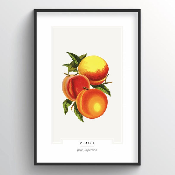 Peach Botanical Art Print