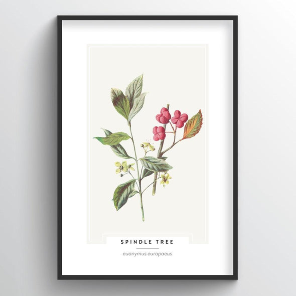 Spindle Tree Botanical Art Print