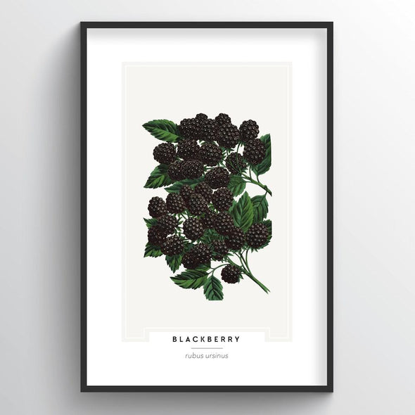 Blackberries Botanical Art Print