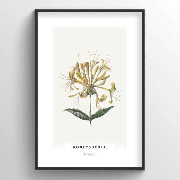 Honeysuckle Botanical Art Print