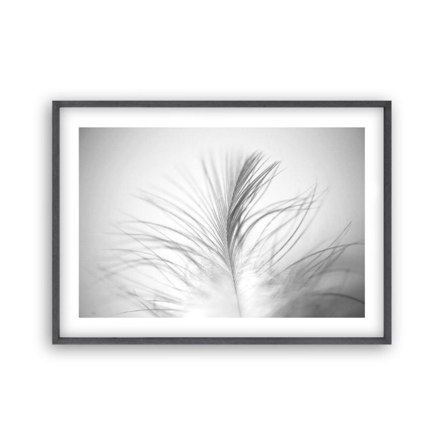 Dusty Feather Print - Blim & Blum