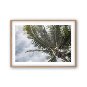 Palm Tree Print - Blim & Blum