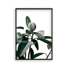 Load image into Gallery viewer, Rubber Plant Print - Blim & Blum