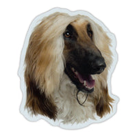 "Magnet - Afghan Hound Dog Breed (4"" x 5"")"