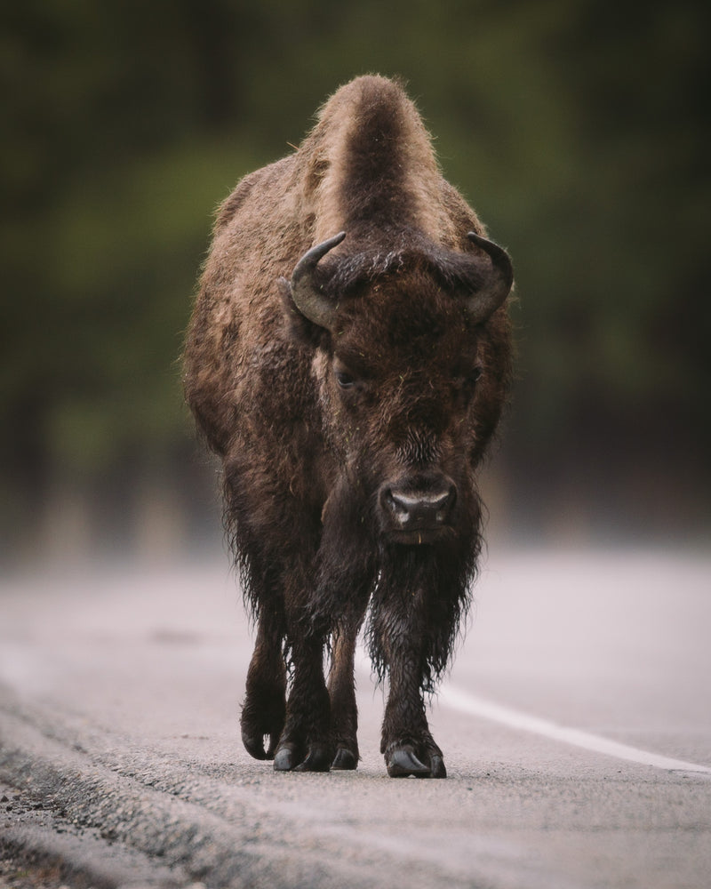 Private Yellowstone Photography Workshop
