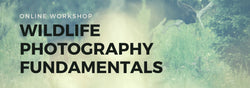 Online Workshop - Wildlife Photography Fundamentals