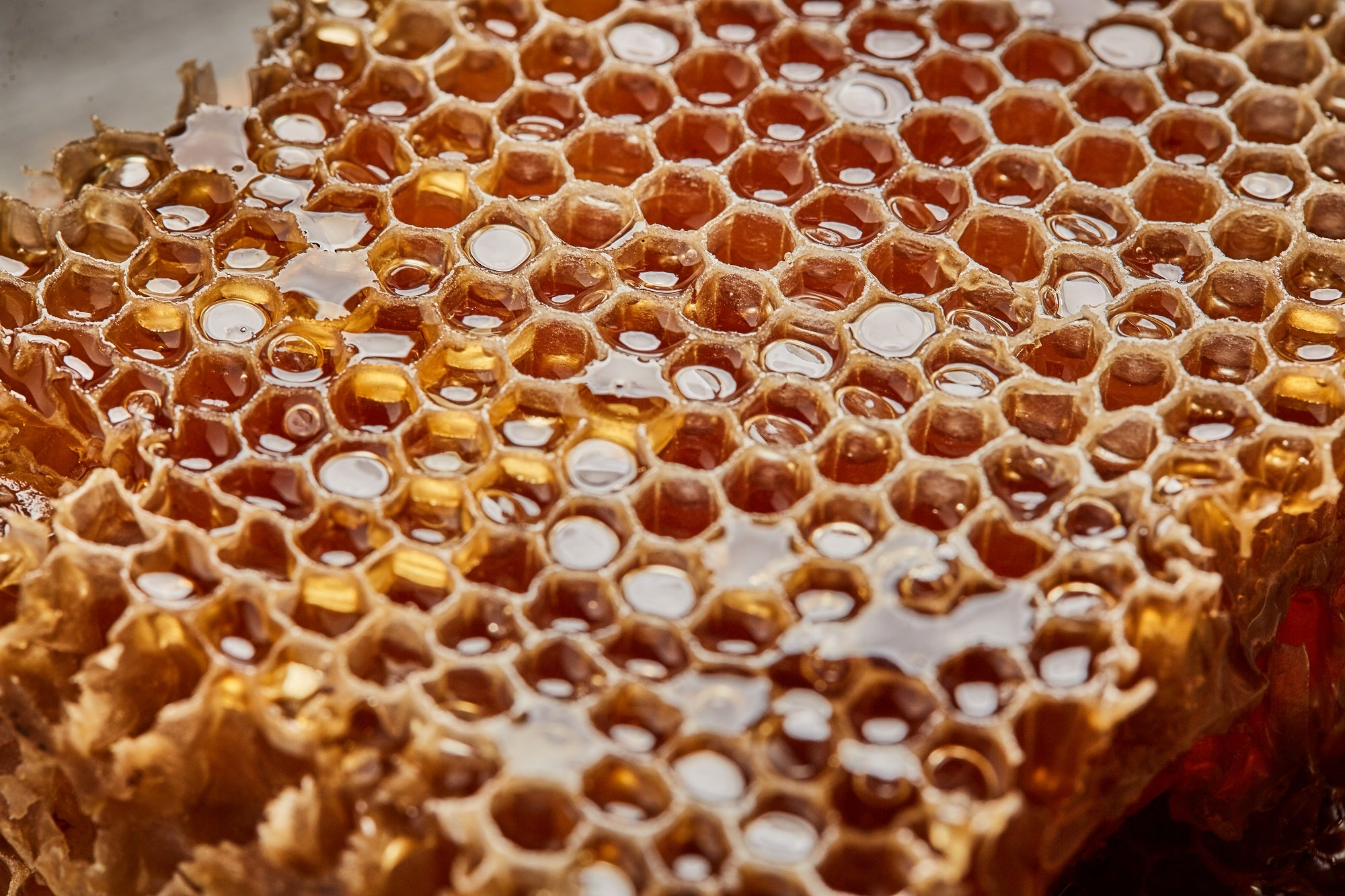 honey comb. bee, sweet