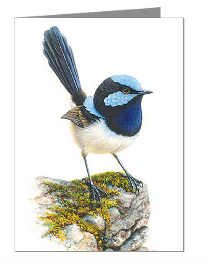 Blue Wren Blank Card